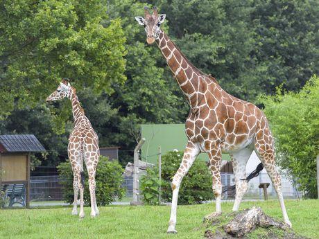 Zoo Jaderberg